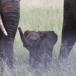 Was wir von Säugetieren über die Geburt lernen können