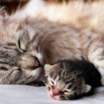 Die Katzenfabel: Vom Ungestörtsein bei der Geburt