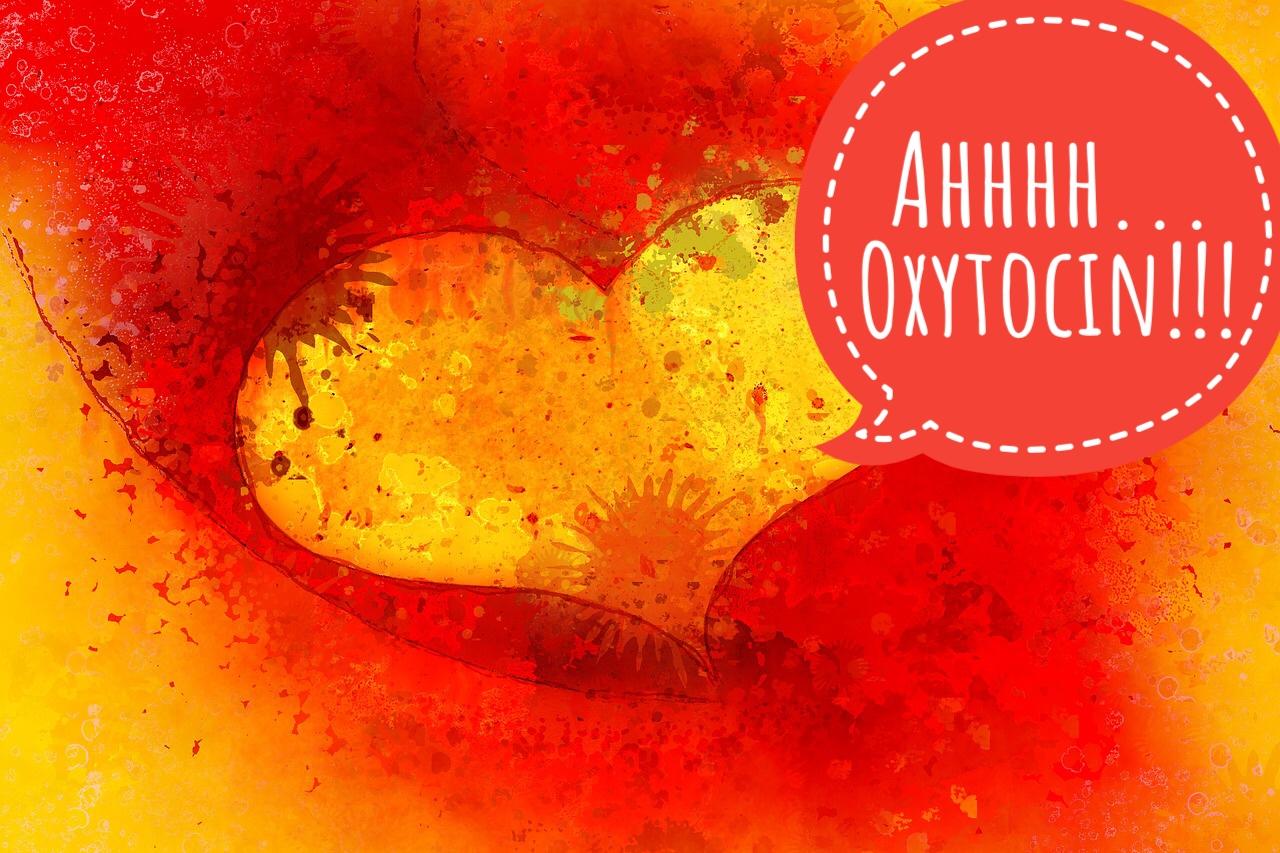 Oxytocin das Liebeshormon